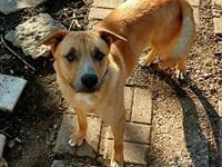 Roscoe Phillips's story Adult shepherd mix Roscoe is a