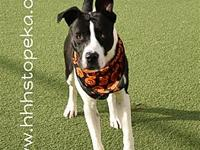 My story My name is Roscoe. I'm a 10 month old Pit Bull
