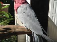 Beautiful bird , very healthy condition, unsexed but