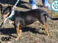 Hi, my name is Rose and I'm a 3-year-old, female,