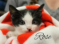 Rose's story The adoption fee is $85.00 with an