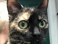 Rose's story Attention Torti lovers! Meet Rose and her
