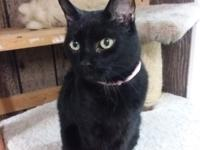 Rose Mary is a very loving older girl, we believe she