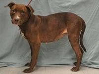Rose's story Rose was picked up as a stray. She is a