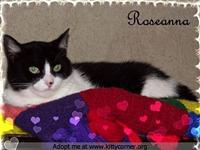 Roseanna's story Please contact Linda