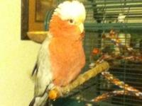 BB is a beautiful bird, Perfect feathers. She talks up