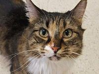 Rosebud's story I am a beautiful lady who is very sweet