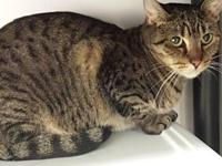 Rosella's story Rosella is a sweet brown tabby female