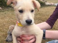 Rosemary: Want a fun-loving girl puppy? Rosemary is a