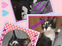 Rosey's story My name is Rosey Im a pretty Tuxedo