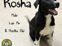 Rosha's story You can fill out an adoption application