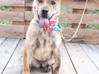 Rosia, Spayed female, 7-months-old, 18-lbs  If you