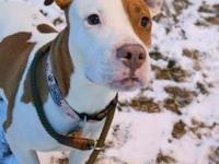 Rosie's story !!! AVAILABLE for Adoption at ACCT Philly