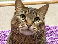 Rosie's story Rosie is a beautiful brown tabby lady who