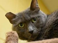 ROSIE's story Rosie is a popular feline around here and