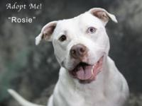 Rosie is a five year old deaf pit bull terrier girl.
