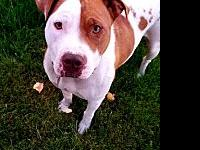 My story FOSTER LOCATION: Payette, IDBREED: RosieAGE: