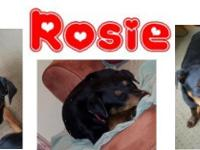 Look at this cutie patootie! Rosie is finally