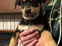 Rosie's story Rosie is an 8 week old mixed breed