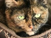 Meet our beautiful Rosie, a tortoiseshell cat who is a