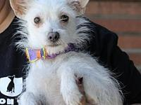 Rosita's story You can fill out an adoption application