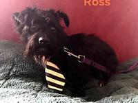 ROSS's story TO MEET AND FOR MORE INFO CALL NO TEXT