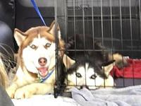 Ross's story All of our dogs are spayed/neutered,