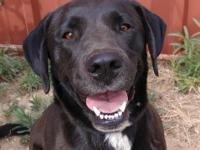 This happy Lab girl we are calling Rosslyn was found on