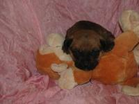 I have a beautiful litter of puppies mom is Mastiff,