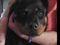 I have a Rottweiler his name is Roc. I have to locate