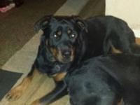I have a 1yr 6 month old female rottweiler, that needs