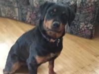 Female rottweiler 2 years of ages. She is not purified.