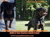 Rottweiler - Baby Girl And Marley - Large - Senior -