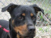 Rottweiler - Beatrice - Transported Out-of-state Due To