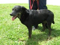 Rottweiler - Cole - Large - Adult - Male - Dog Cole is