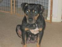 Rottweiler - Daisy Mae - Medium - Senior - Female -