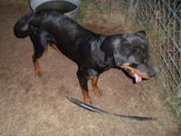 I have a 2yr old female Rottweiler looking for a new
