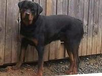 i have a german male rotti... born 5/20/14 up to date