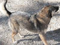 Rottweiler - Parker - Medium - Adult - Male - Dog Well