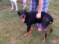 Rottweiler - Pilar - Large - Young - Female - Dog Meet