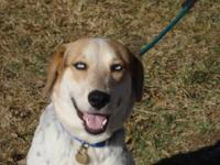 Rottweiler - Pretty Girl - Medium - Adult - Female -