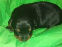 I have 2 female rottweilers left. They have had their