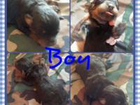 I have 2 Rottweiler young puppies avaliable. 1 child