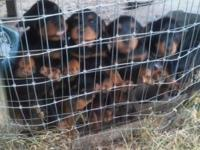 Moving out of state need to sale puppies fast, register