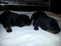 i have 3 males and 2 females left i deliver my puppies