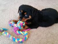 I have registered rottweiler puppies for sale. They are