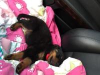 Hello, I have a 3 month old fully trained Rottweiler.