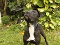 Rottweiler - Sebastian - Large - Baby - Male - Dog I am