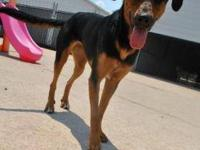 Rottweiler - Terri - Large - Young - Female - Dog I'm a