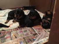 My dog Sadie had her first litter of puppies May 30,